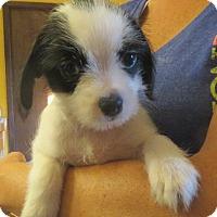 Adopt A Pet :: Bernard - Salem, NH