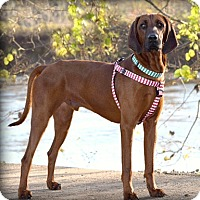 Adopt A Pet :: Tanner - Cleveland, OH