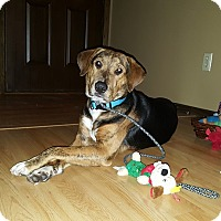 Adopt A Pet :: Bruiser *In Foster* - Appleton, WI