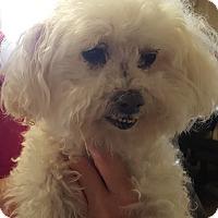 Adopt A Pet :: Happy - Canoga Park, CA