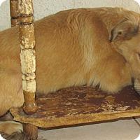 Adopt A Pet :: Percy - San Ysidro, CA