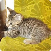Adopt A Pet :: *MONKEY - Upper Marlboro, MD