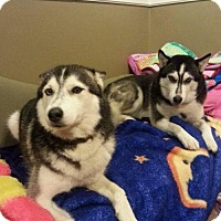 Adopt A Pet :: Bella & Kierra - COURTESY - Lee's Summit, MO