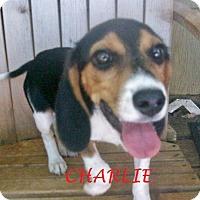 Adopt A Pet :: CHARLIE - Ventnor City, NJ