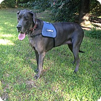 Adopt A Pet :: Showe - Austin, TX