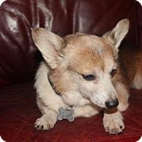 Adopt A Pet :: Barkley - tampa, FL