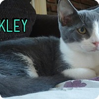 Adopt A Pet :: Buckley - Trevose, PA