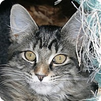 Adopt A Pet :: Bismarck - Port Angeles, WA