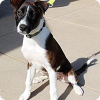 Adopt A Pet :: Annie - Adoption Pending - Centreville, VA