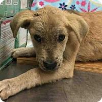 Adopt A Pet :: A009557 - Rosenberg, TX