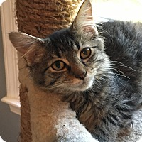 Adopt A Pet :: Jed - Germantown, MD