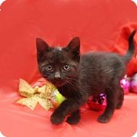 Adopt A Pet :: Macy - Kenner, LA