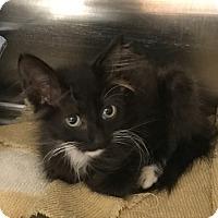 Adopt A Pet :: Tinker - Salisbury, NC