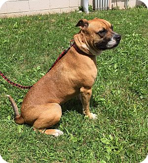 Boxer Mix Dog for adoption in Coeburn, Virginia - Bo