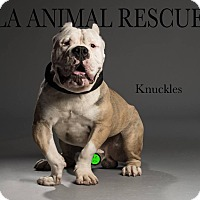 Adopt A Pet :: Knuckles - Los Angeles, CA