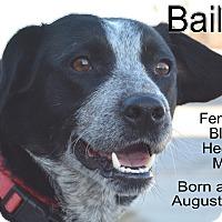 Adopt A Pet :: Bailey - Richmond, MO