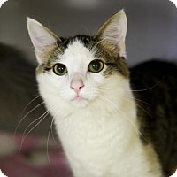 Adopt A Pet :: Bisque - Kettering, OH