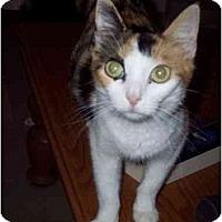 Adopt A Pet :: Beep - Delmont, PA