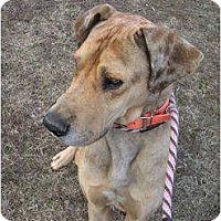 Adopt A Pet :: Marmaduke - Glastonbury, CT