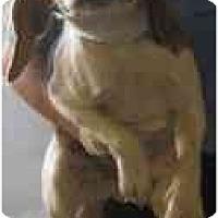 Adopt A Pet :: # 9 Suzie - Beagle - ADOPTED - Alliance, OH