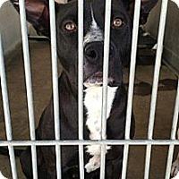 Adopt A Pet :: Kelly URGENT - San Diego, CA