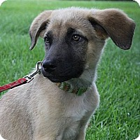 Adopt A Pet :: Ursula - Broomfield, CO
