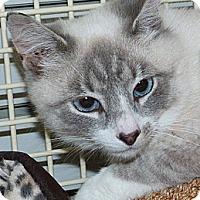 Adopt A Pet :: Lance - Stafford, VA