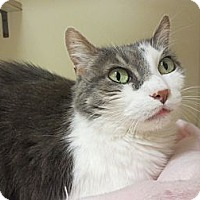 Adopt A Pet :: Isadora - Chicago, IL