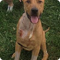 Adopt A Pet :: Magic Mike **Courtesy Post** - Atlanta, GA