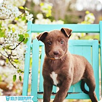 Adopt A Pet :: Adelaide - Peachtree City, GA