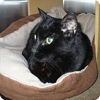 Adopt A Pet :: Beatrice - Colmar, PA