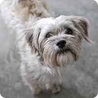 Adopt A Pet :: Freddie - Buffalo, WY