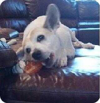 Shepherd (Unknown Type) Mix Dog for adoption in Birmingham, Michigan - CHARLOTTE