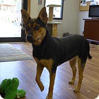 Adopt A Pet :: Annie - Manning, SC