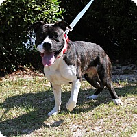 Adopt A Pet :: Connor - Sylvania, GA