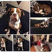 Adopt A Pet :: YAHOO - Atlanta, GA