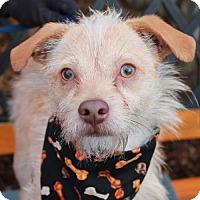 Adopt A Pet :: Grady-PENDING - Garfield Heights, OH