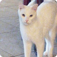 Adopt A Pet :: AJ - Arlington/Ft Worth, TX