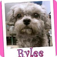 Adopt A Pet :: Rylee Franklin - Pataskala, OH