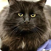 Adopt A Pet :: Edmund - Sacramento, CA