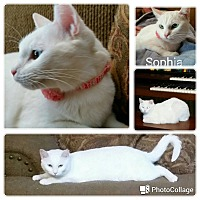 Adopt A Pet :: Sophia - Arlington/Ft Worth, TX