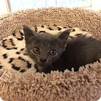 Adopt A Pet :: Tootie - Gainesville, FL