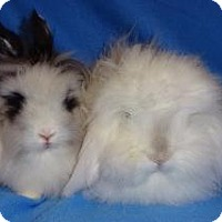 Adopt A Pet :: Tenley - Woburn, MA