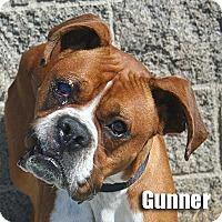 Adopt A Pet :: Gunner - Encino, CA