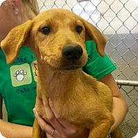 Adopt A Pet :: Maggie - Barnegat, NJ