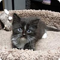 Adopt A Pet :: LM-Annie - Devon, PA
