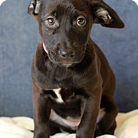 Adopt A Pet :: Jersi - Waldorf, MD