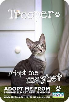 Domestic Shorthair Kitten for adoption in Jacksonville, Florida - Trooper