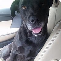 Adopt A Pet :: Diva - Gainesville, FL