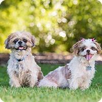 Adopt A Pet :: Lilo - El Cajon, CA